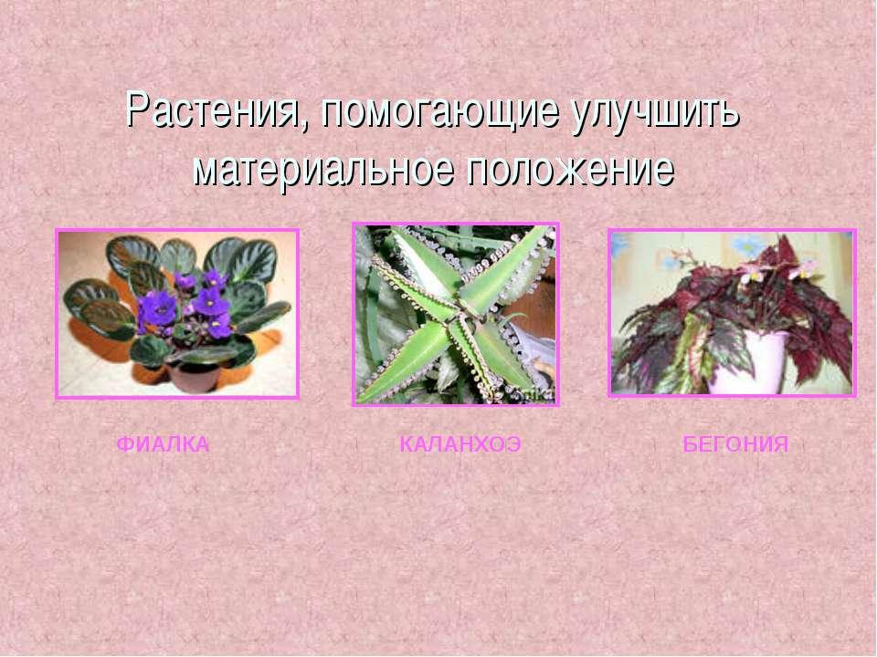 Растения, помогающие улучшить материальное положение ФИАЛКА КАЛАНХОЭ БЕГОНИЯ