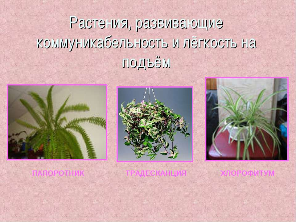 Растения, развивающие коммуникабельность и лёгкость на подъём ПАПОРОТНИК ТРАД...
