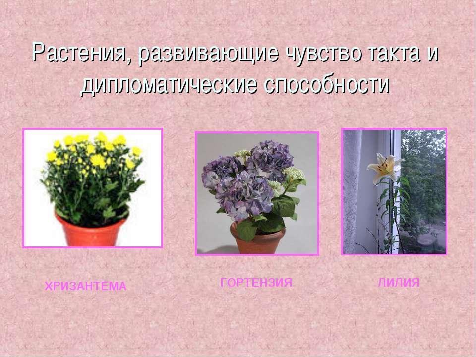 Растения, развивающие чувство такта и дипломатические способности ХРИЗАНТЕМА ...