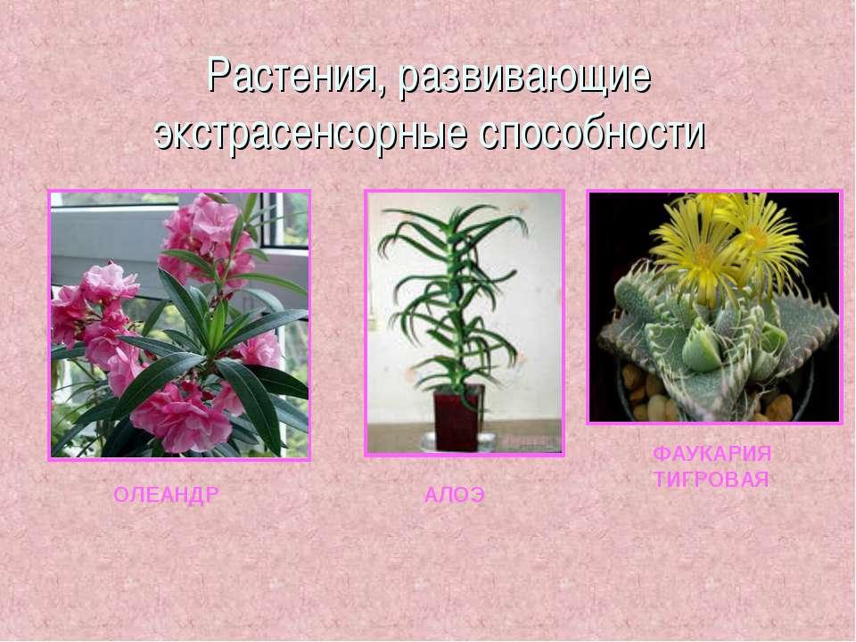 Растения, развивающие экстрасенсорные способности ОЛЕАНДР АЛОЭ ФАУКАРИЯ ТИГРОВАЯ