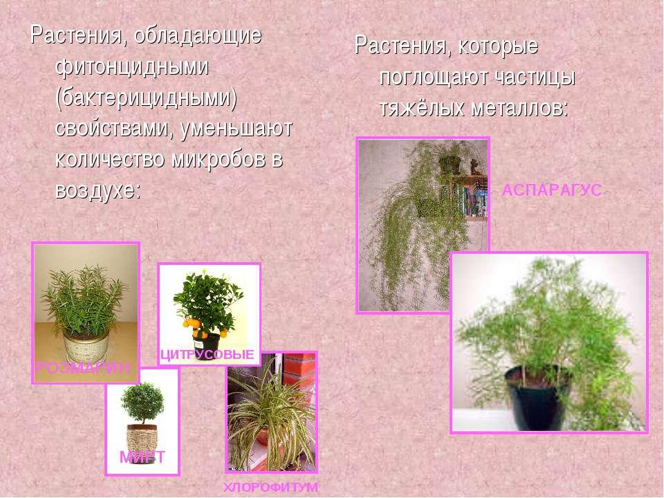 Растения, обладающие фитонцидными (бактерицидными) свойствами, уменьшают коли...