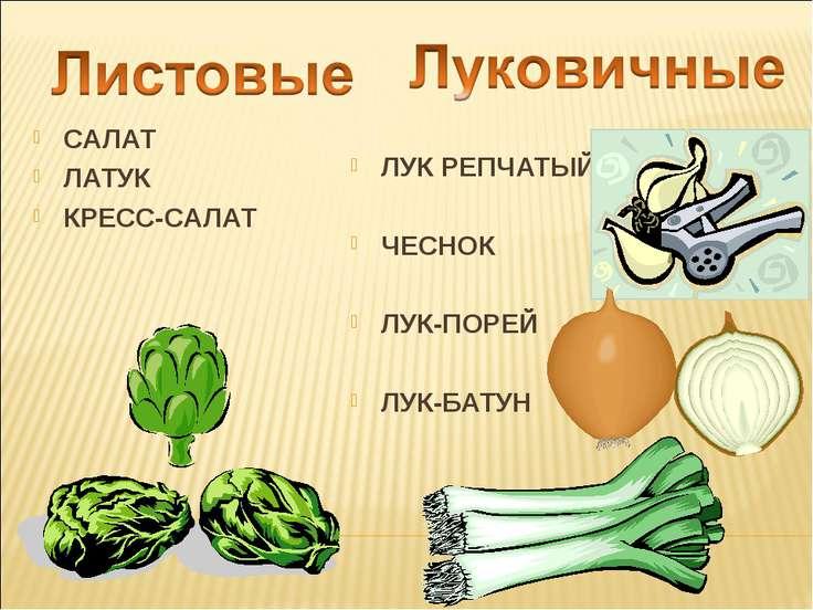 Курсовая работа на тему салат