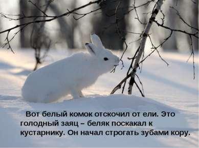 Вот белый комок отскочил от ели. Это голодный заяц – беляк поскакал к кустарн...