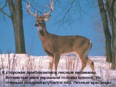 К сторожке приблизились лесные великаны. Ветвистые рога украшали головы олене...