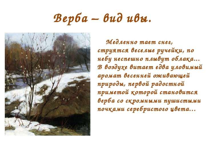 Верба – вид ивы. Медленно тает снег, струятся веселые ручейки, по небу неспеш...