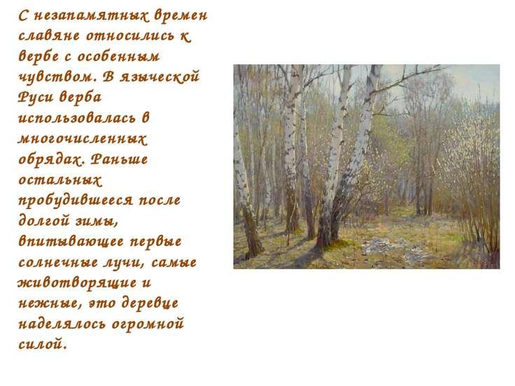 С незапамятных времен славяне относились к вербе с особенным чувством. В языч...