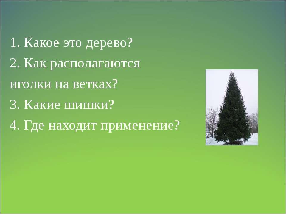 1. Какое это дерево? 2. Как располагаются иголки на ветках? 3. Какие шишки? 4...