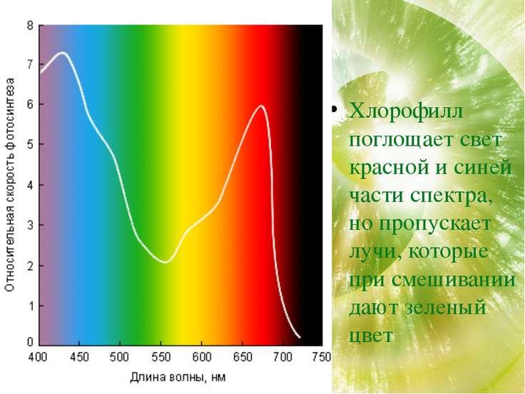 Хлорофилл поглощает из солнечного спектра