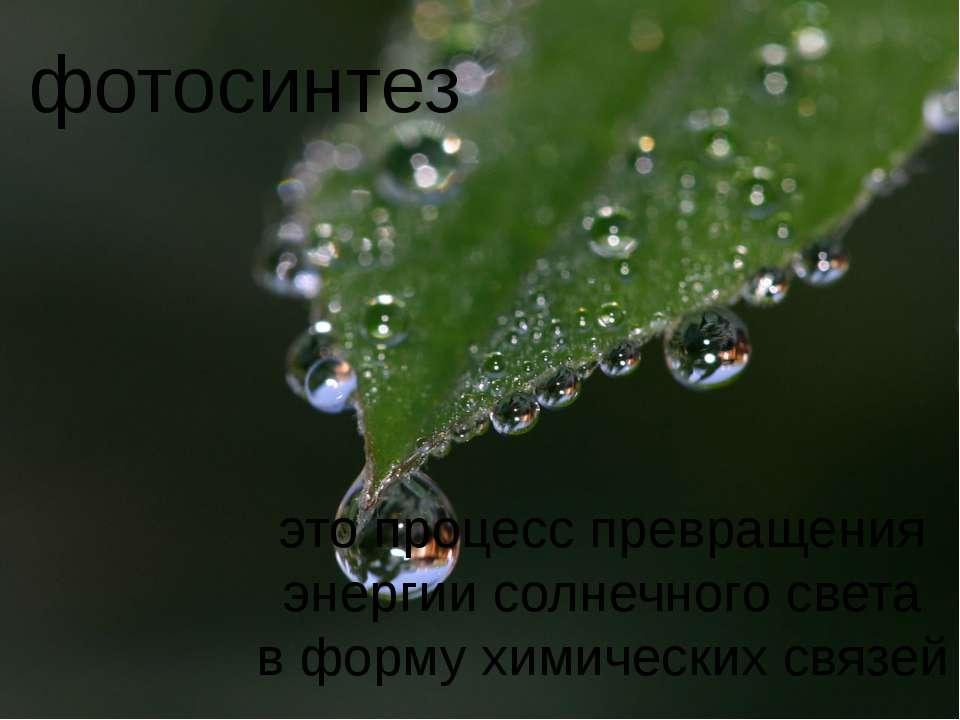 фотосинтез это процесс превращения энергии солнечного света в форму химически...