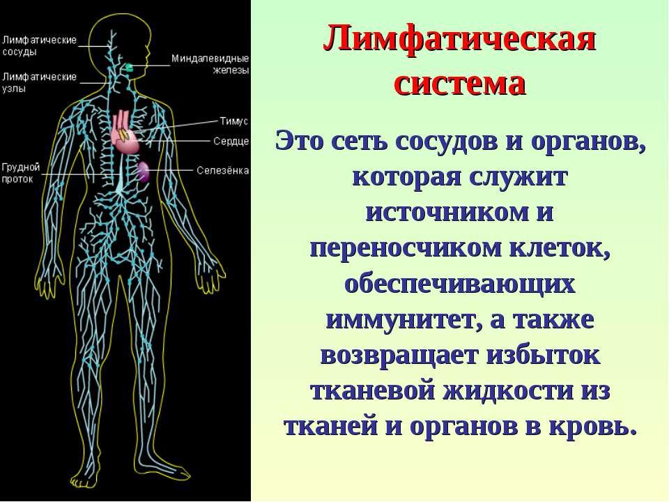 Лимфатическая система Это сеть сосудов и органов, которая служит источником и...