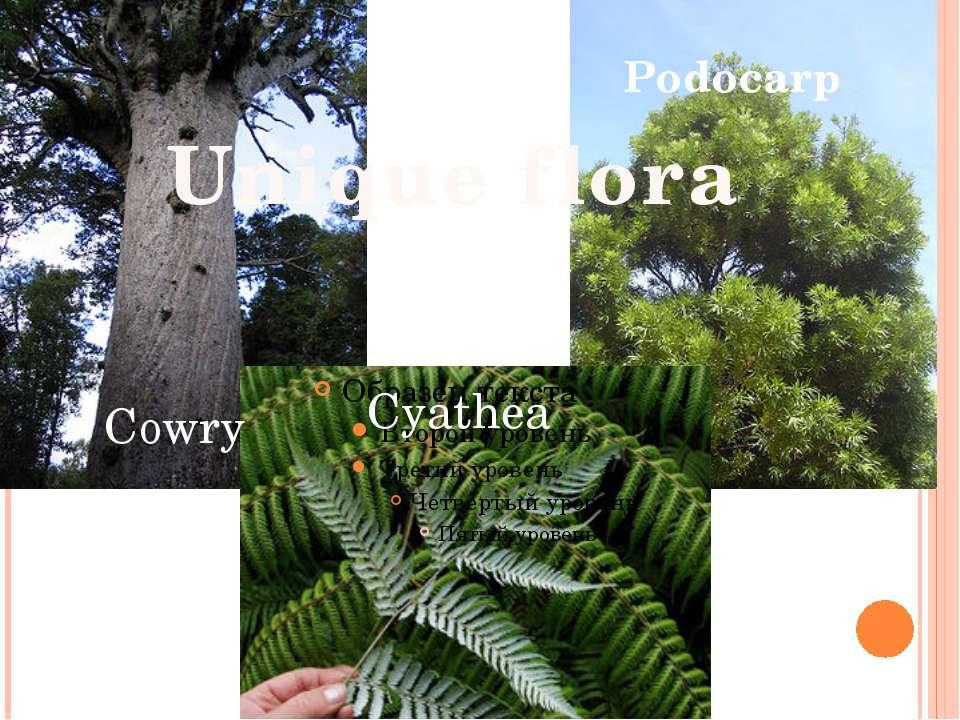 Unique flora Cyathea Podocarp Cowry
