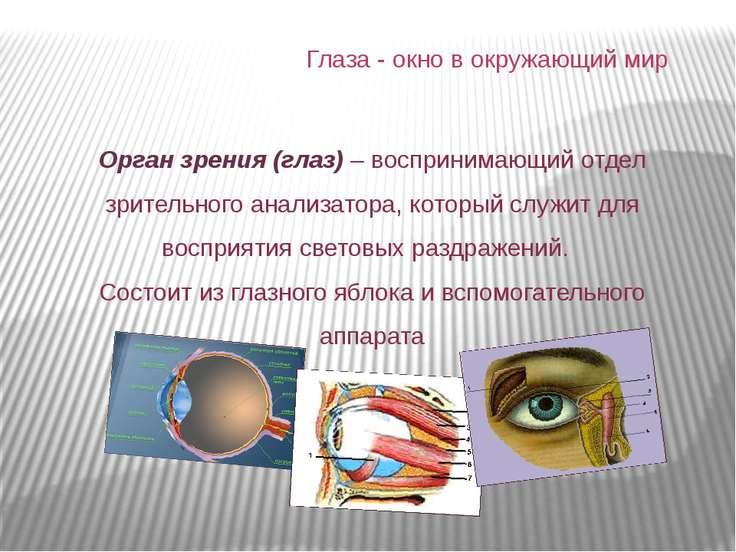 Орган зрения (глаз) – воспринимающий отдел зрительного анализатора, который с...