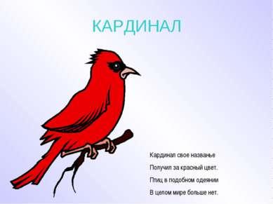 КАРДИНАЛ Кардинал свое названье Получил за красный цвет. Птиц в подобном одея...