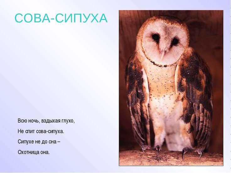 СОВА-СИПУХА Всю ночь, вздыхая глухо, Не спит сова-сипуха. Сипухе не до сна – ...