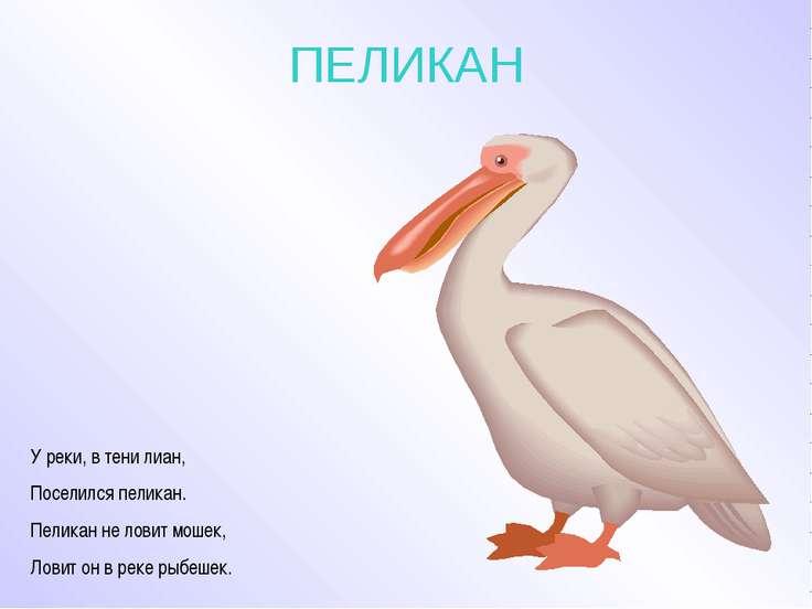 ПЕЛИКАН У реки, в тени лиан, Поселился пеликан. Пеликан не ловит мошек, Ловит...