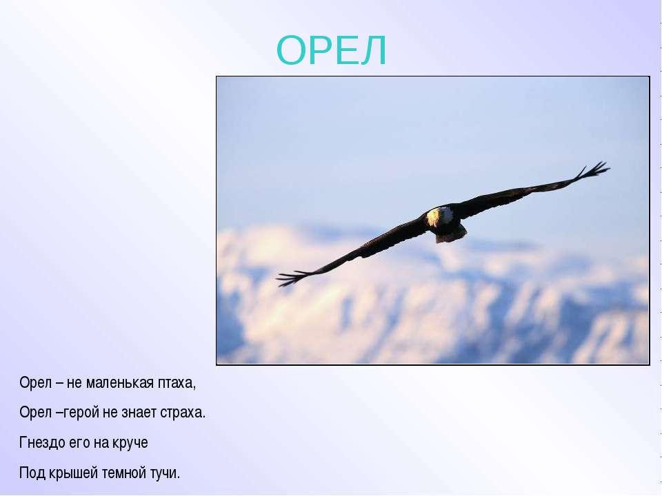 ОРЕЛ Орел – не маленькая птаха, Орел –герой не знает страха. Гнездо его на кр...