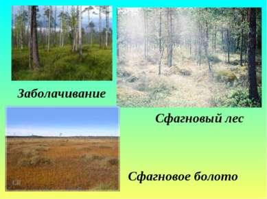 Заболачивание Сфагновый лес Сфагновое болото