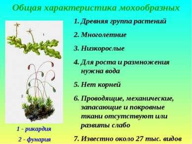 Общая характеристика мохообразных 1 - рикардия 2 - фунария Древняя группа рас...