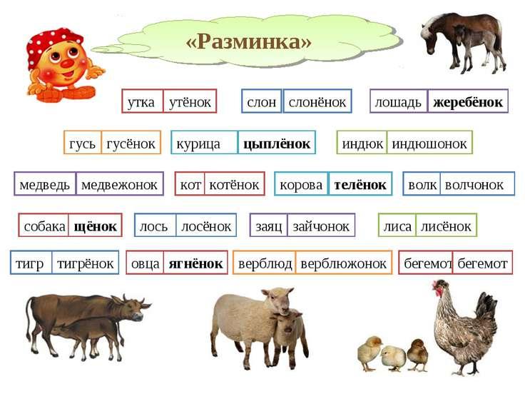 «Разминка» утка утёнок слон слонёнок лошадь жеребёнок гусь гусёнок индюк индю...