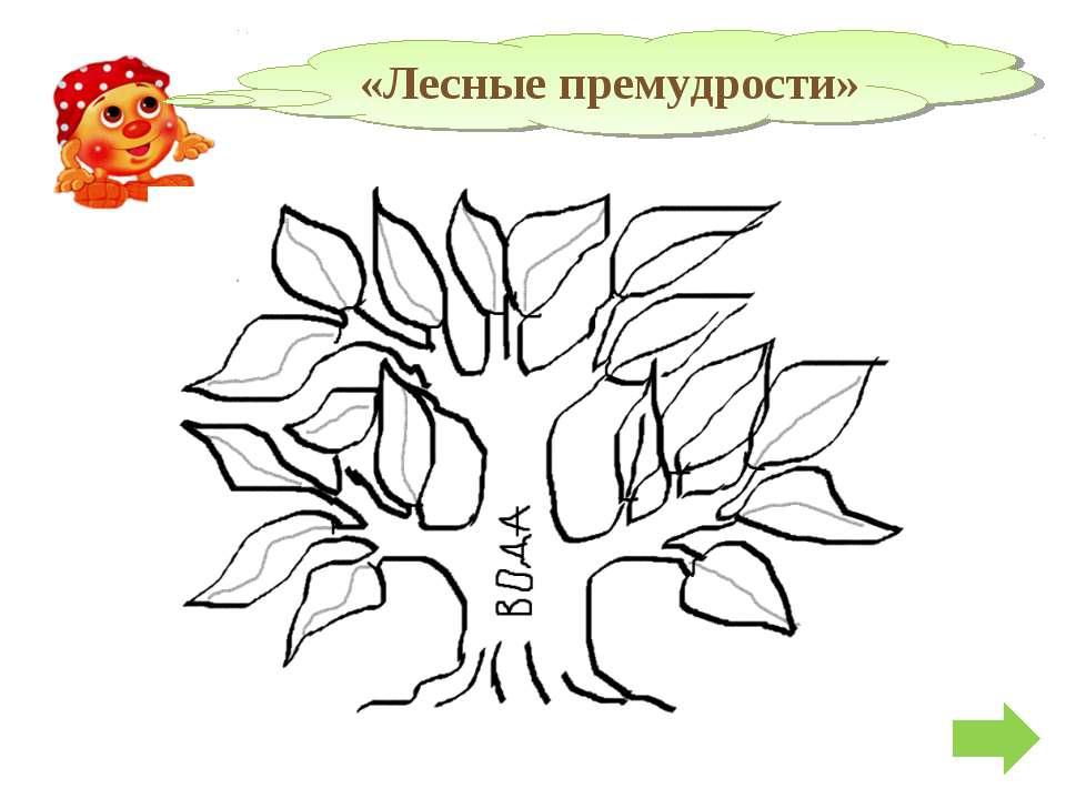 «Лесные премудрости»