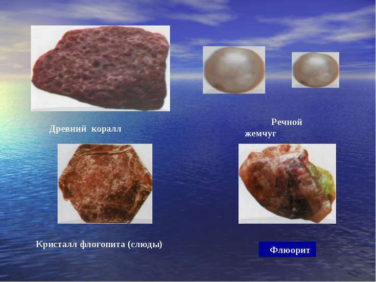 Древний коралл Речной жемчуг Кристалл флогопита (слюды) Флюорит