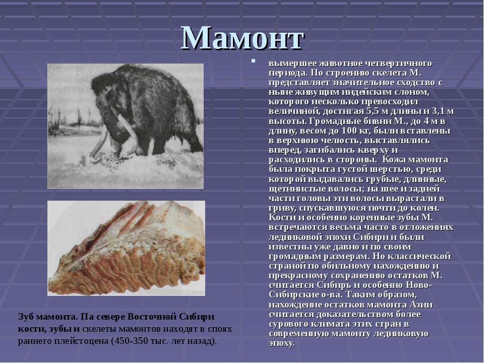 Мамонт вымершее животное четвертичного периода. По строению скелета М. предст...