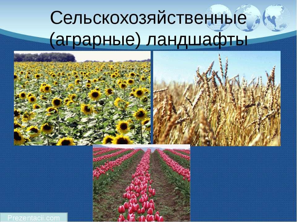 Сельскохозяйственные (аграрные) ландшафты Prezentacii.com