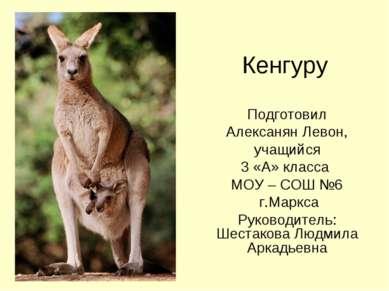 Кенгуру Подготовил Алексанян Левон, учащийся 3 «А» класса МОУ – СОШ №6 г.Марк...