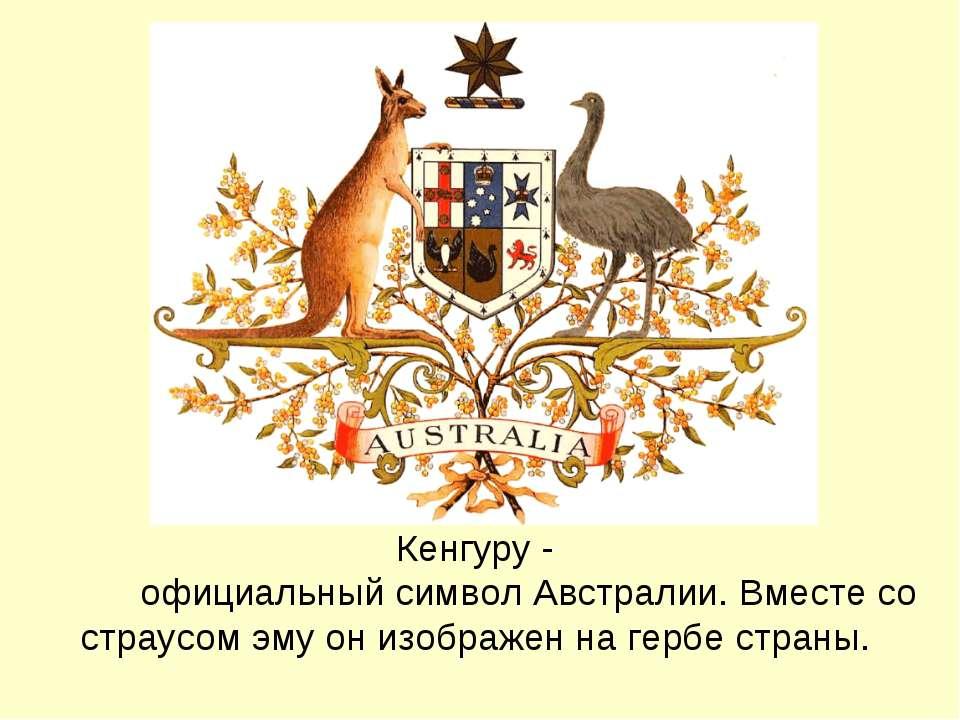 Кенгуру - официальный символ Австралии. Вместе со страусом эму он изображен н...
