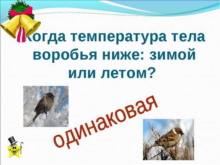 Когда температура тела воробья ниже: зимой или летом?