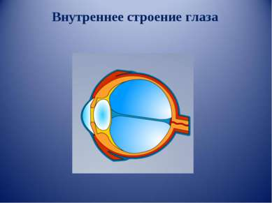 Внутреннее строение глаза