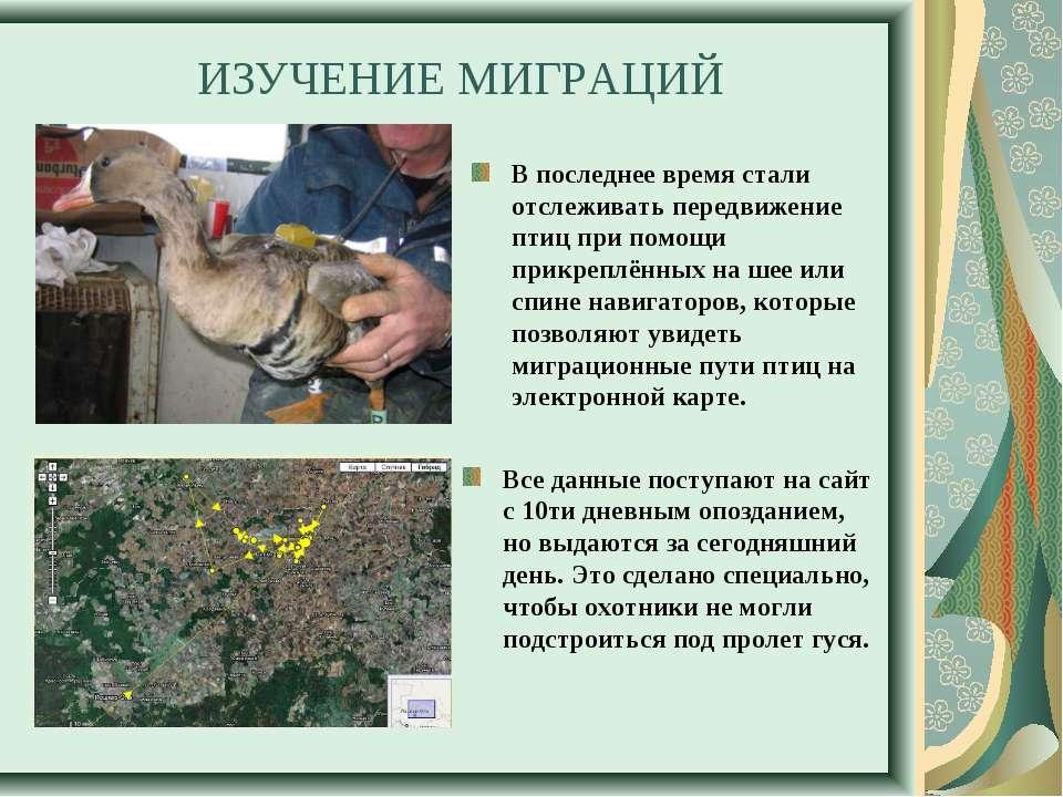 ИЗУЧЕНИЕ МИГРАЦИЙ В последнее время стали отслеживать передвижение птиц при п...