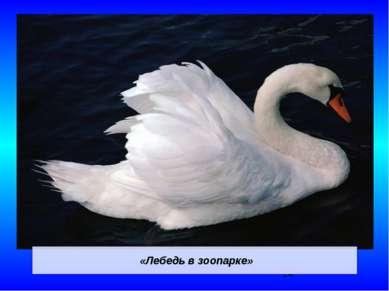 «Лебедь в зоопарке»