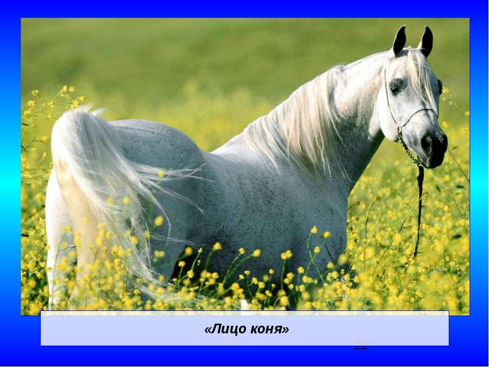 «Лицо коня»