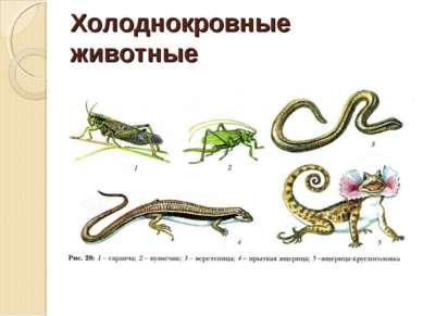 Холоднокровные животные