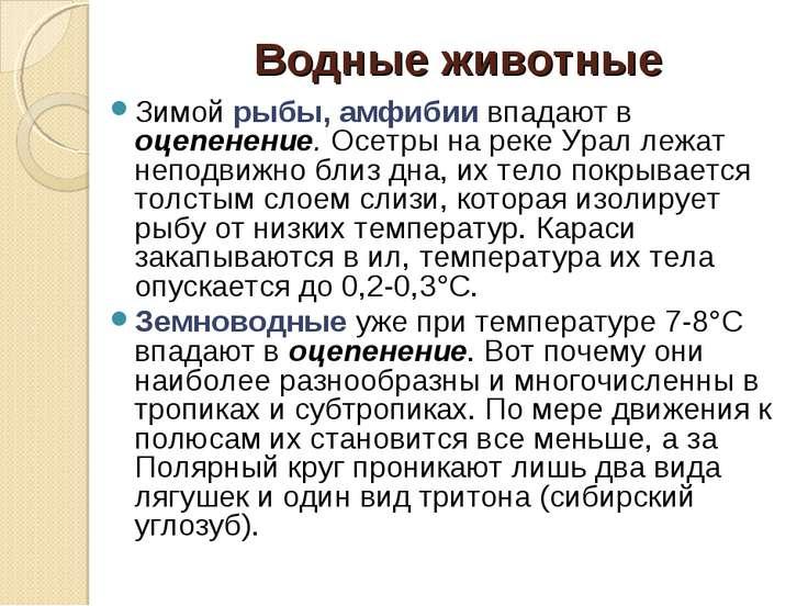 Водные животные Зимой рыбы, амфибии впадают в оцепенение. Осетры на реке Урал...