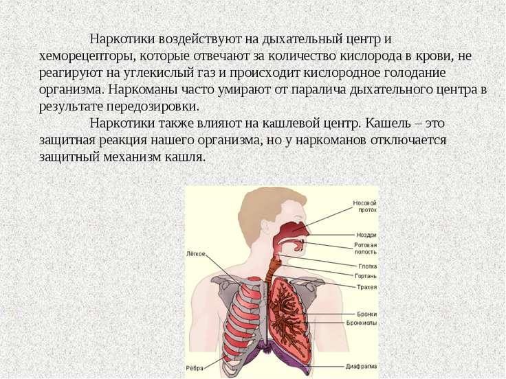 Наркотики воздействуют на дыхательный центр и хеморецепторы, которые отвечают...