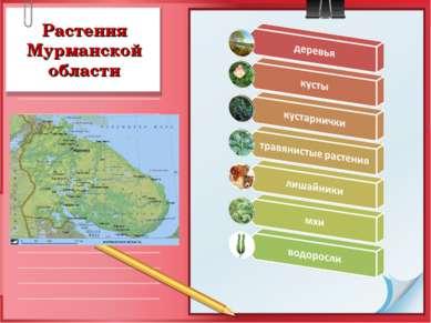 Растения Мурманской области