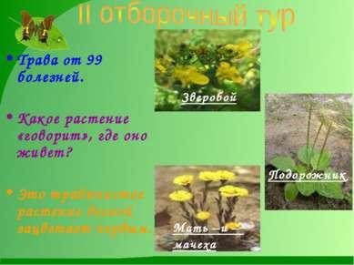 Трава от 99 болезней. Какое растение «говорит», где оно живет? Это травянисто...