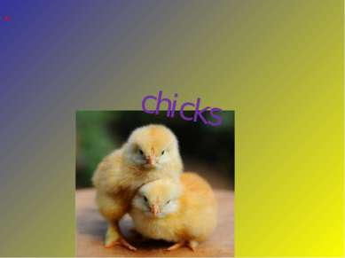 chicks These are