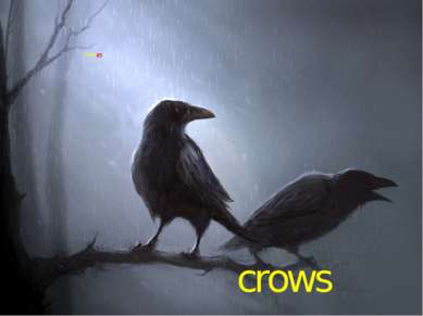 crows Those are