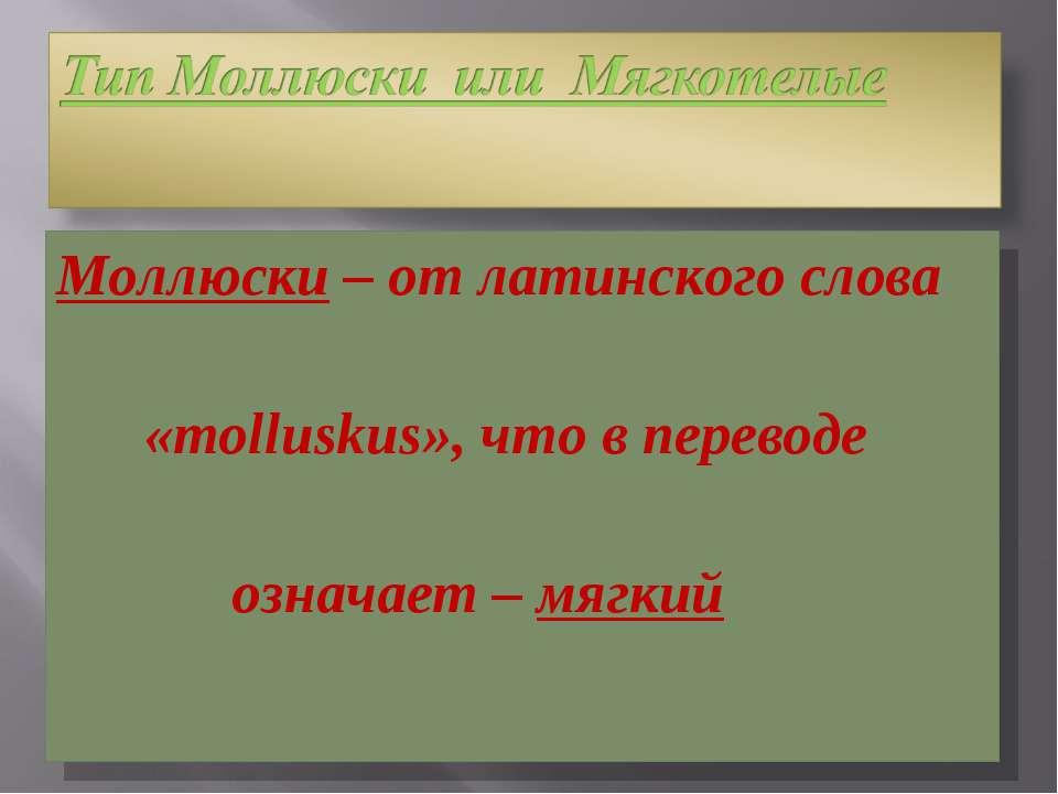 Моллюски – от латинского слова «molluskus», что в переводе означает – мягкий