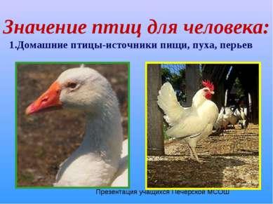 Значение птиц для человека: 1.Домашние птицы-источники пищи, пуха, перьев