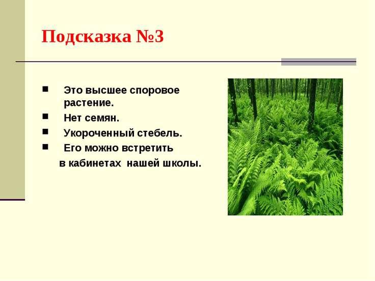 Подсказка №3 Это высшее споровое растение. Нет семян. Укороченный стебель. Ег...
