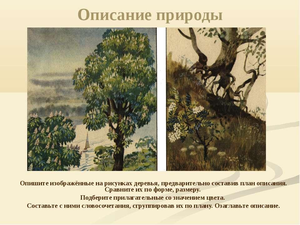 Описание природы Опишите изображённые на рисунках деревья, предварительно сос...