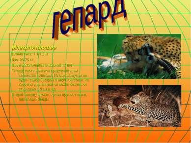 Млекопитающее Длина тела: 1,1-1,5 м Вес: 20-75 кг Продолжительность жизни: 17...