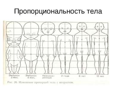 Пропорциональность тела