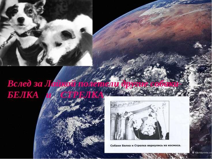 Вслед за Лайкой полетели другие собаки- БЕЛКА и СТРЕЛКА