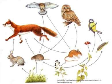 http://900igr.net/datai/biologija/Smena-ekosistem/0004-003-1.-Samoreguljatsij...