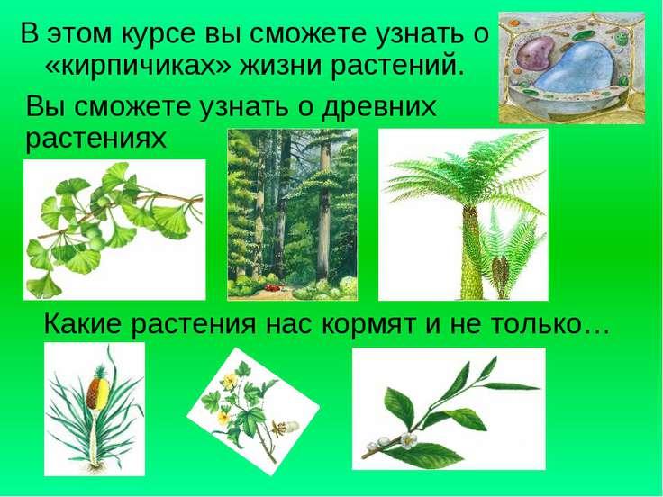 В этом курсе вы сможете узнать о «кирпичиках» жизни растений. Вы сможете узна...